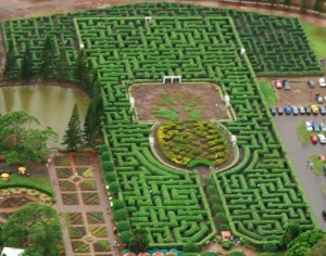 dole-pineapple-plantation-maze